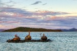 Daydream Island Mermaid Statues