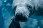 Five Endangered Marine Species – Can We Save Them?